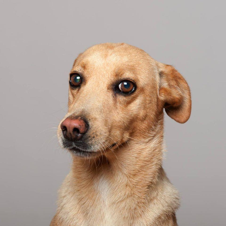 65843679 841369289589398 7463335958402826240 o - Fotógrafo português ajuda cães de abrigo a serem adotados