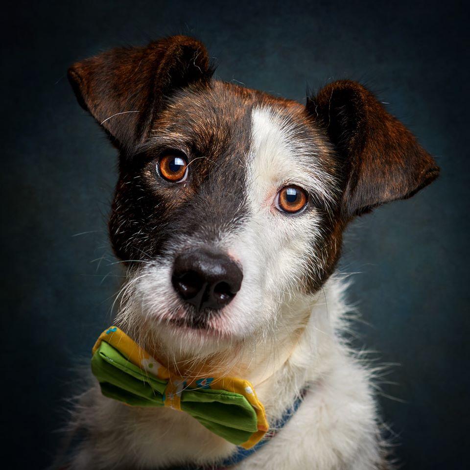 67167554 856132618113065 5298126619594981376 o 1 - Fotógrafo português ajuda cães de abrigo a serem adotados