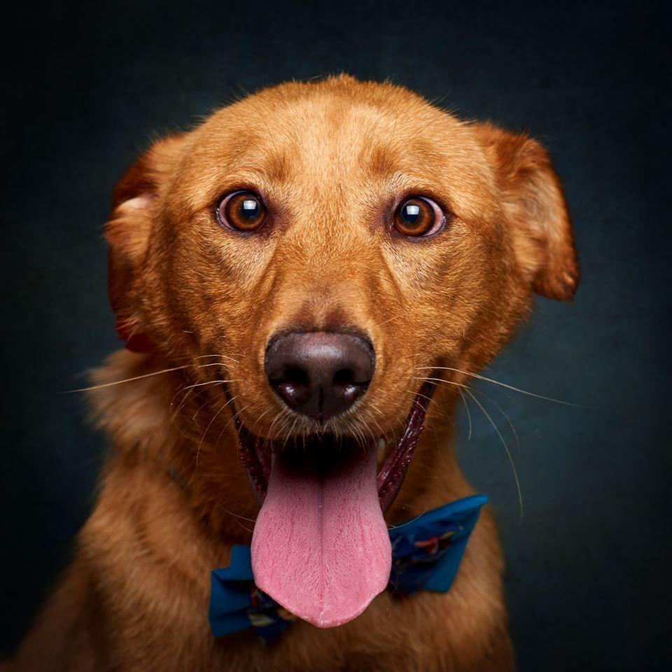 67293723 856132711446389 9106538382258864128 o - Fotógrafo português ajuda cães de abrigo a serem adotados