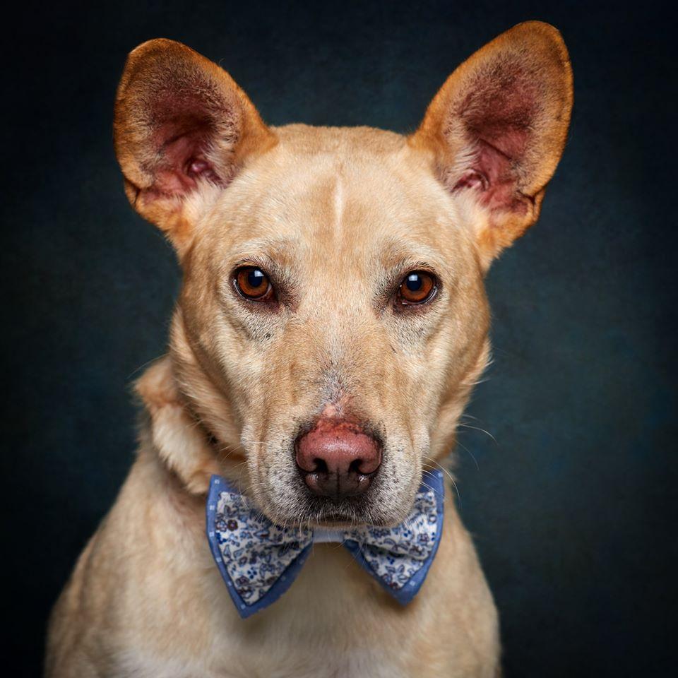 67395600 856132201446440 1822598333022076928 o - Fotógrafo português ajuda cães de abrigo a serem adotados