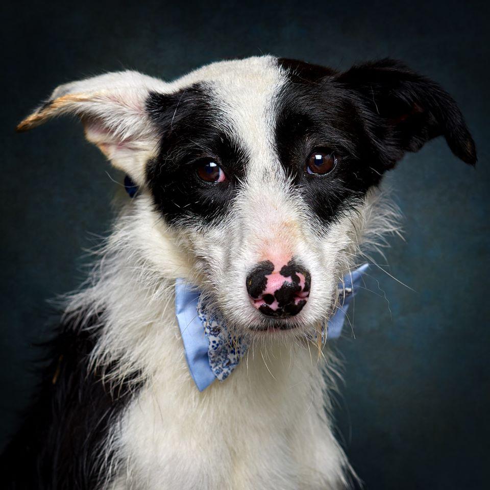 67419729 856132548113072 856013640954806272 o 1 - Fotógrafo português ajuda cães de abrigo a serem adotados