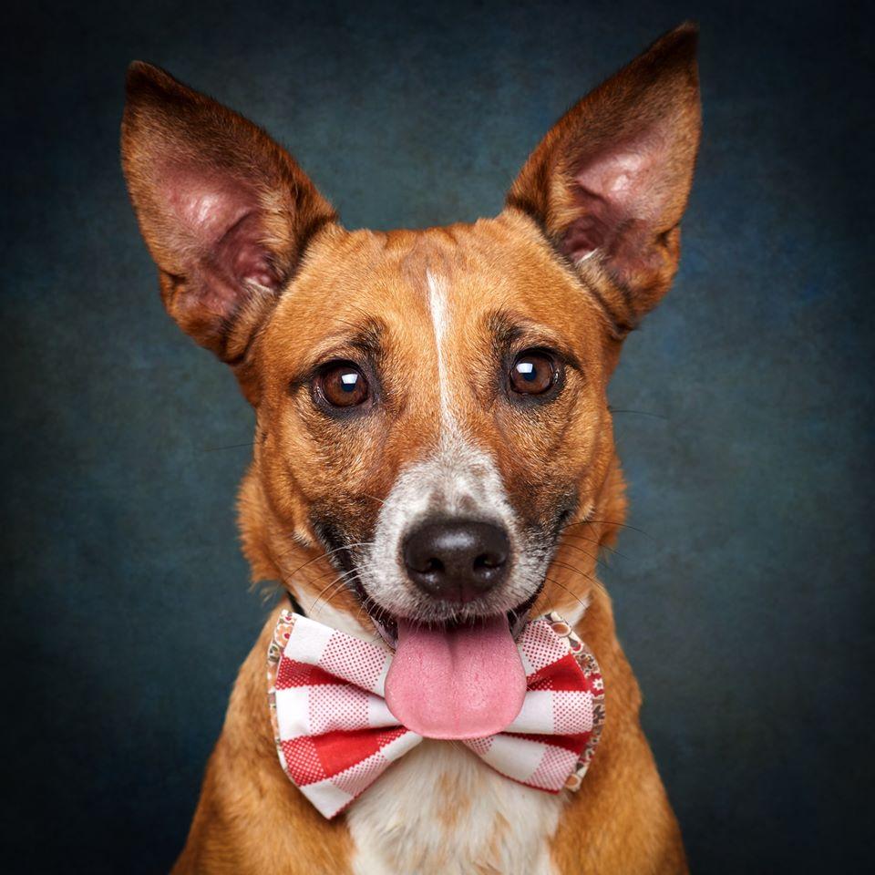 67942572 869275000132160 4190966698741858304 o 1 - Fotógrafo português ajuda cães de abrigo a serem adotados