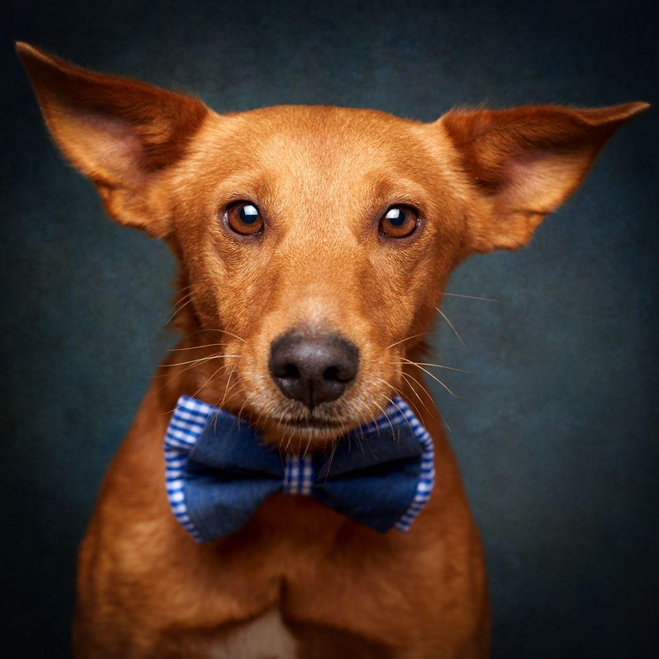 67963544 869274743465519 6048067509075050496 o - Fotógrafo português ajuda cães de abrigo a serem adotados