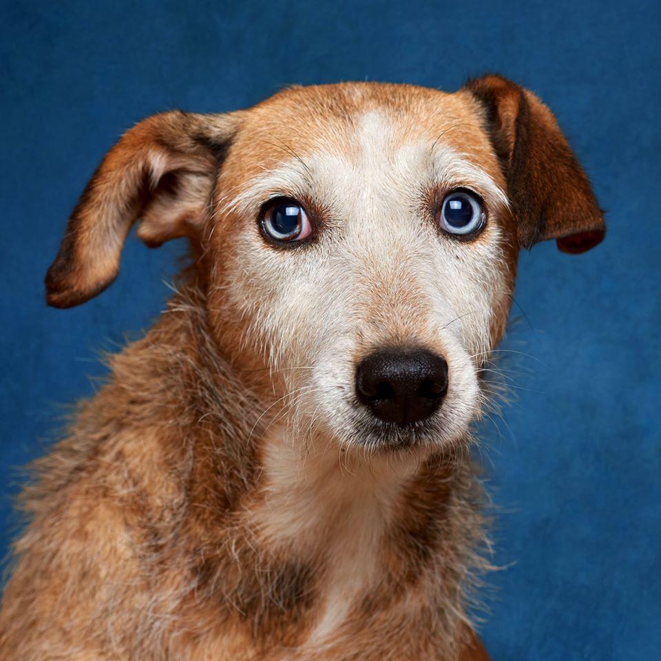 70499789 893196304406696 8452997286413205504 o - Fotógrafo português ajuda cães de abrigo a serem adotados