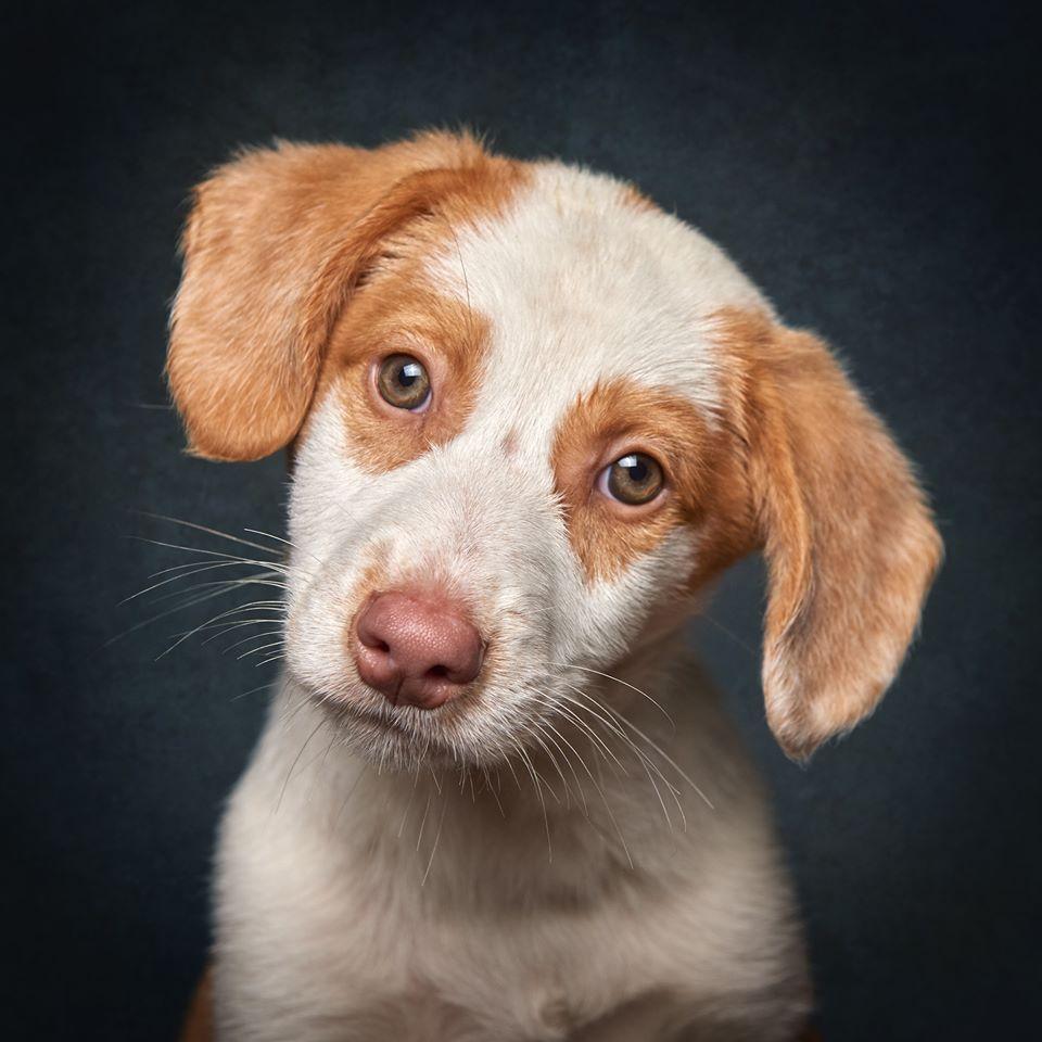 80280569 973615303031462 943422285627260928 o - Fotógrafo português ajuda cães de abrigo a serem adotados