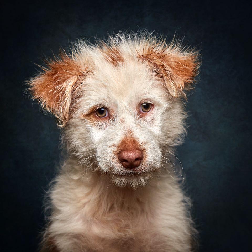 80567288 973615633031429 3321272624876617728 o - Fotógrafo português ajuda cães de abrigo a serem adotados