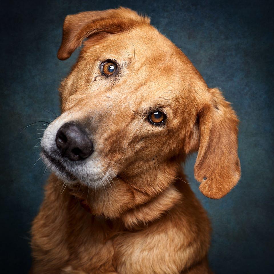 81939592 992502244476101 1104500524348080128 o 1 - Fotógrafo português ajuda cães de abrigo a serem adotados