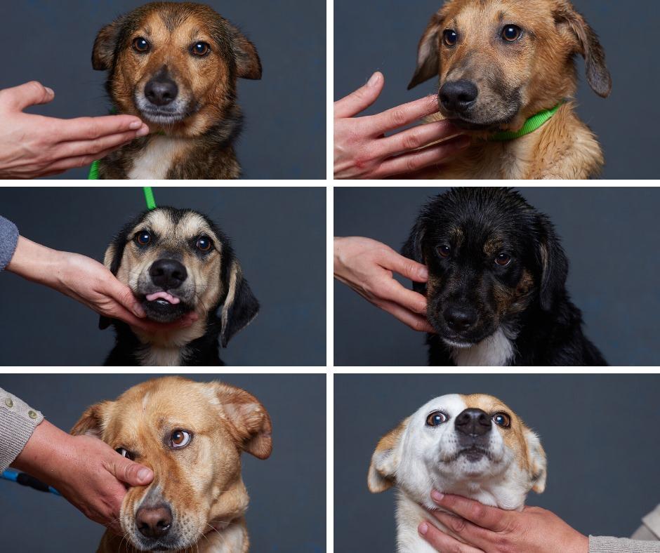 83253978 1008860892840236 1203700262997327872 n - Fotógrafo português ajuda cães de abrigo a serem adotados