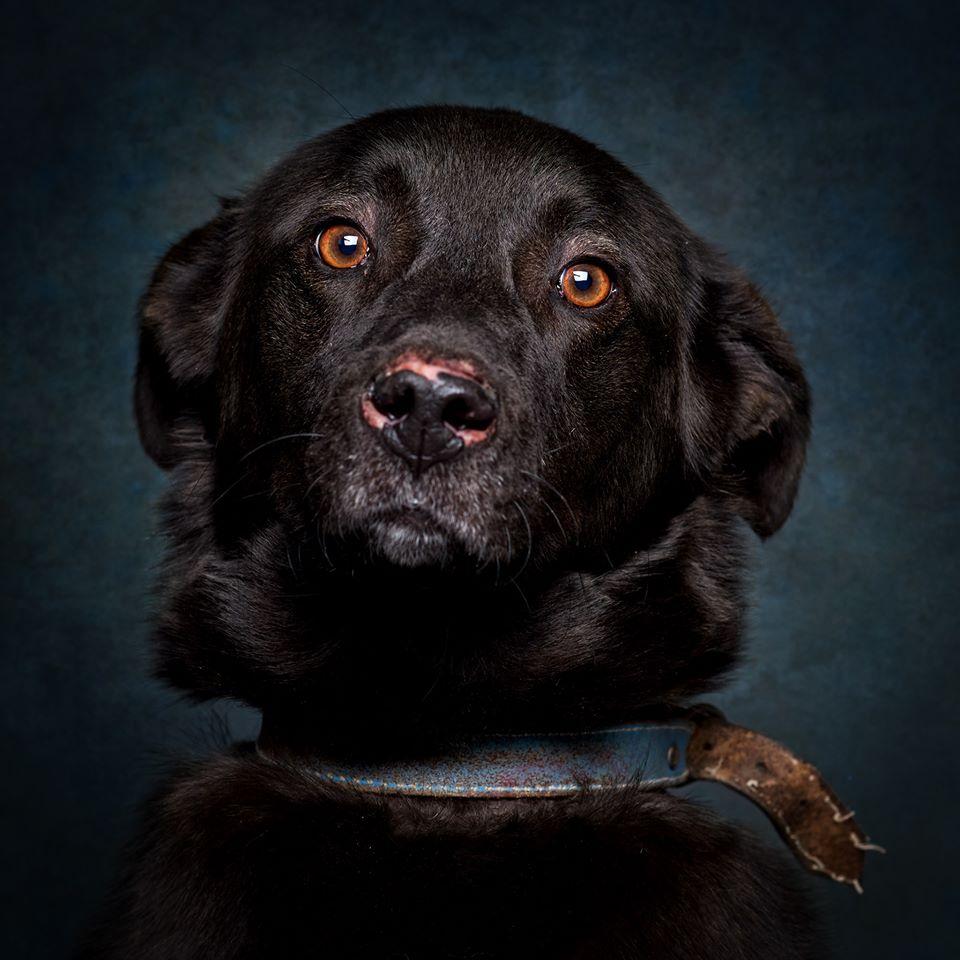 83346623 1002043433521982 1449986989263683584 o - Fotógrafo português ajuda cães de abrigo a serem adotados