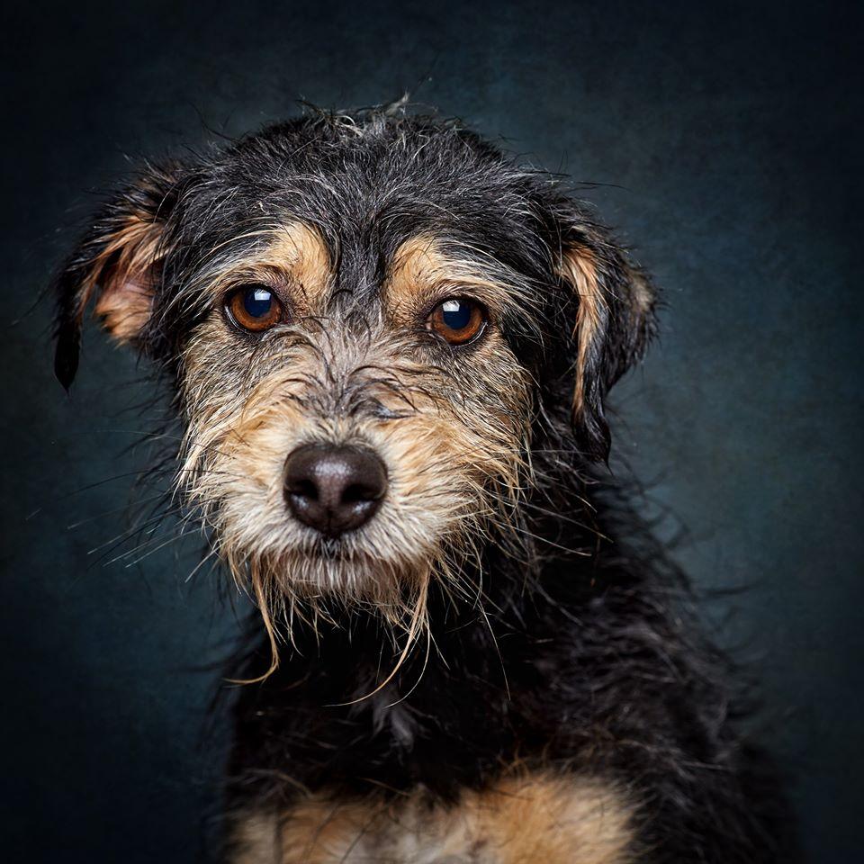 84154754 1010171749375817 5743907438524891136 o - Fotógrafo português ajuda cães de abrigo a serem adotados
