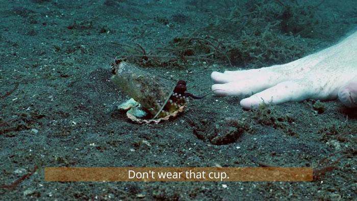 1 - Mergulhador convence bebê polvo a deixar copo plástico para morar em uma concha