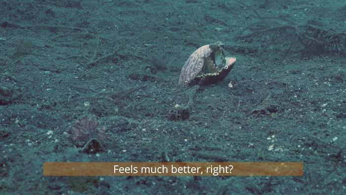 10 - Mergulhador convence bebê polvo a deixar copo plástico para morar em uma concha