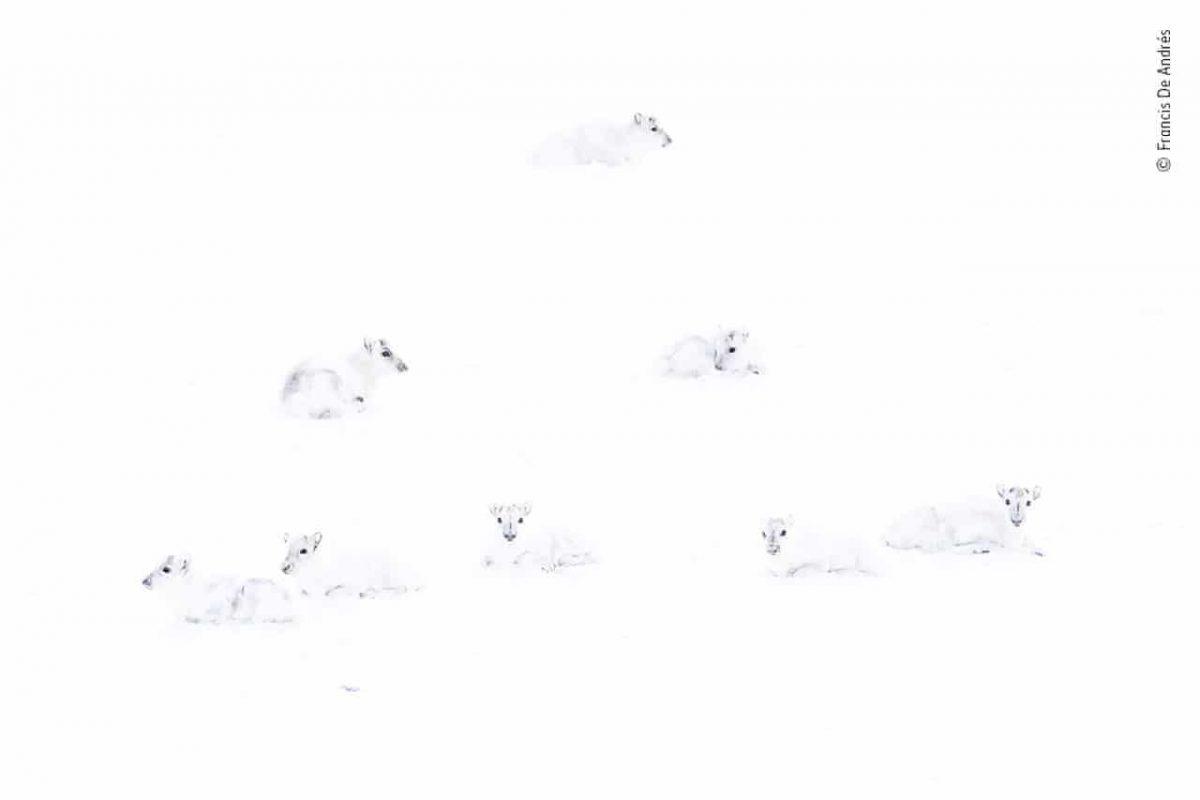 1280 3 scaled - Foto de ratinhos brigando por comida no metrô ganha concurso de fotografia