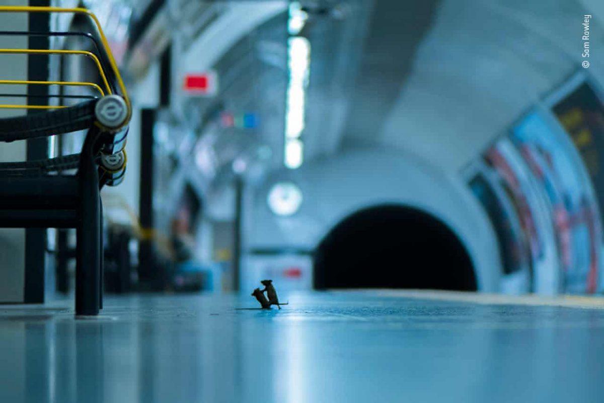 1280 4 scaled - Foto de ratinhos brigando por comida no metrô ganha concurso de fotografia