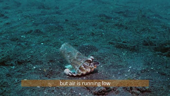 5 - Mergulhador convence bebê polvo a deixar copo plástico para morar em uma concha