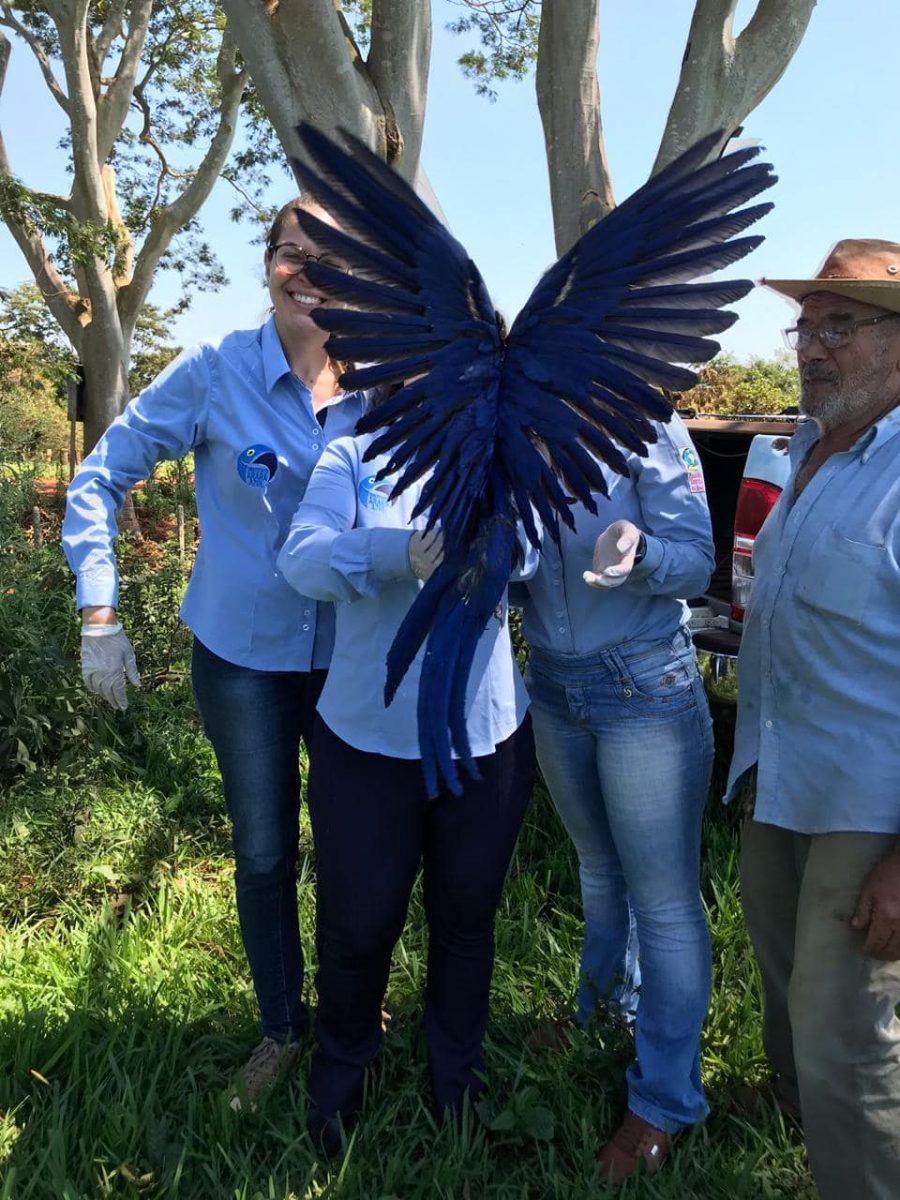 55901874 2386319348085633 5651695444162510848 o scaled - Bióloga que salvou Arara Azul de ser extinta ganha personagem da Turma da Mônica