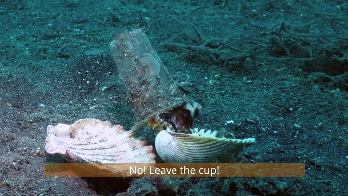 7 - Mergulhador convence bebê polvo a deixar copo plástico para morar em uma concha
