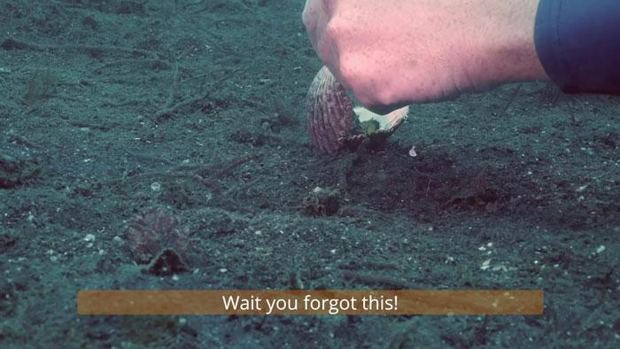 9 - Mergulhador convence bebê polvo a deixar copo plástico para morar em uma concha