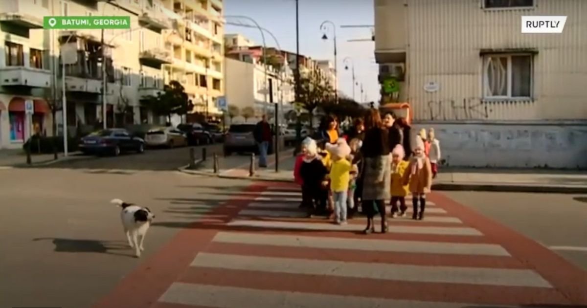cachorro de rua ajuda criancas de uma escola a atravessar a rua parando carros com latidos 2 - Cachorro de rua ajuda crianças de uma escola a atravessar a rua parando carros com latidos