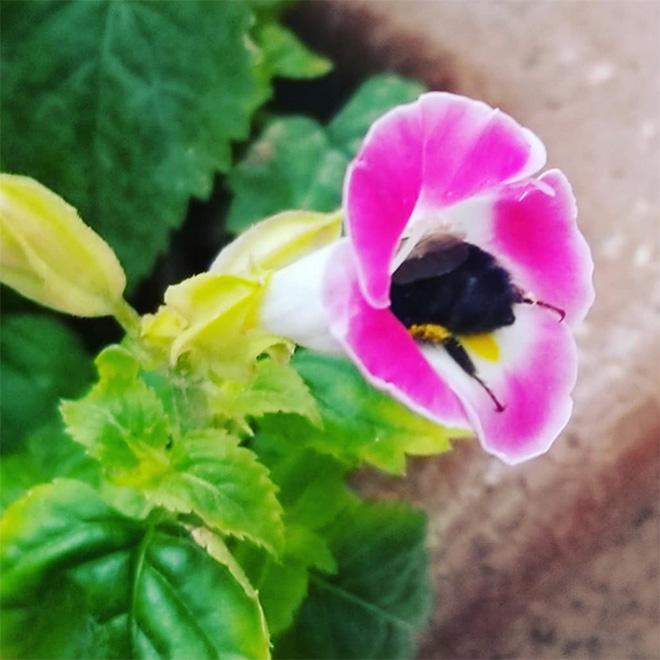 """tired bumblebees11 - Fotos de abelhas dormindo em flores com o """"bumbum para fora"""" viralizam"""