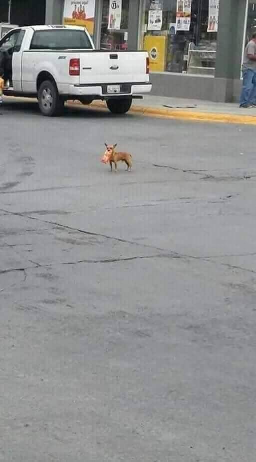 """90230321 2716670731713405 7909376184767479808 n - Homem em quarentena envia seu cãozinho em uma missão para comprar """"Cheetos"""""""