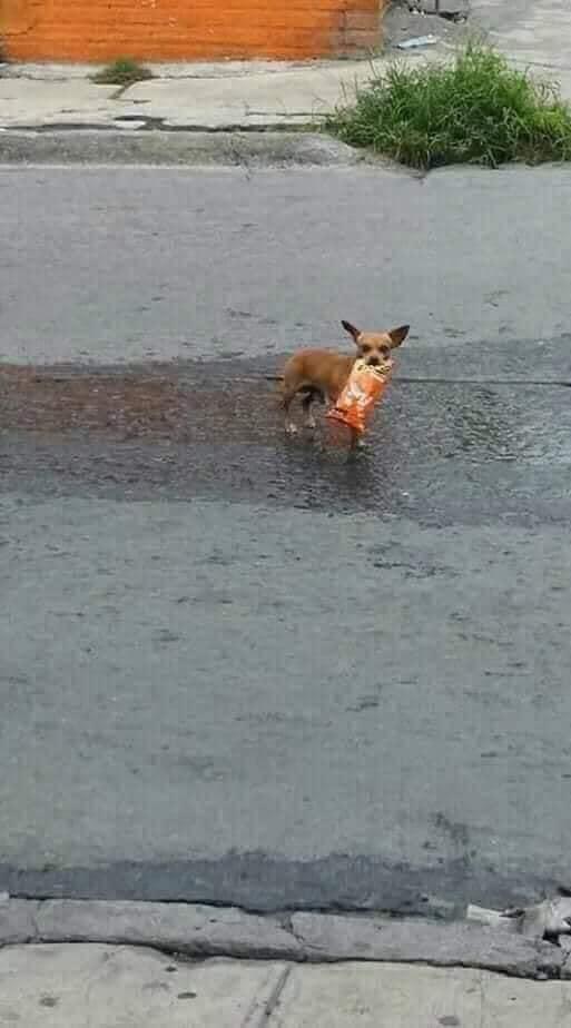 """90350386 2716670758380069 6929606454202597376 n - Homem em quarentena envia seu cãozinho em uma missão para comprar """"Cheetos"""""""