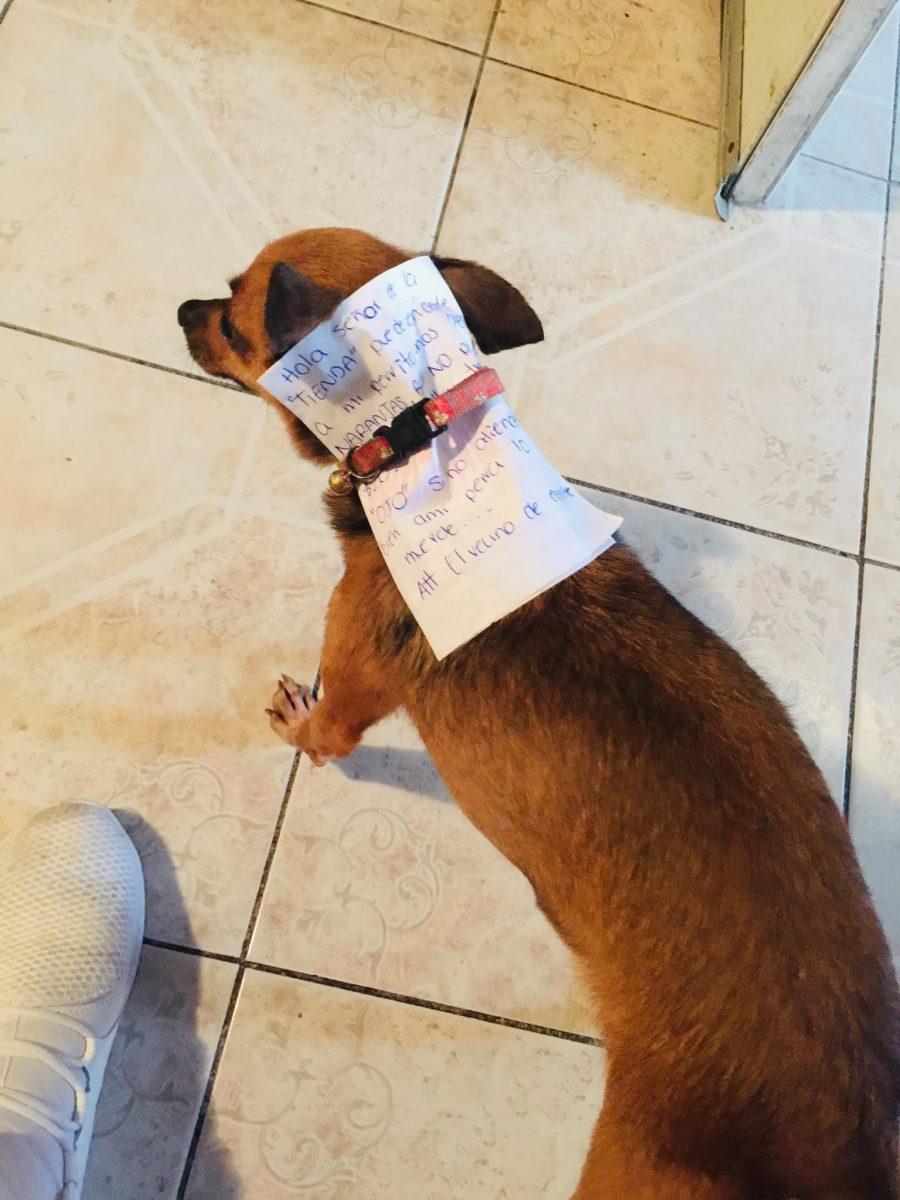 """90620867 2716681375045674 4007829503693815808 o scaled - Homem em quarentena envia seu cãozinho em uma missão para comprar """"Cheetos"""""""