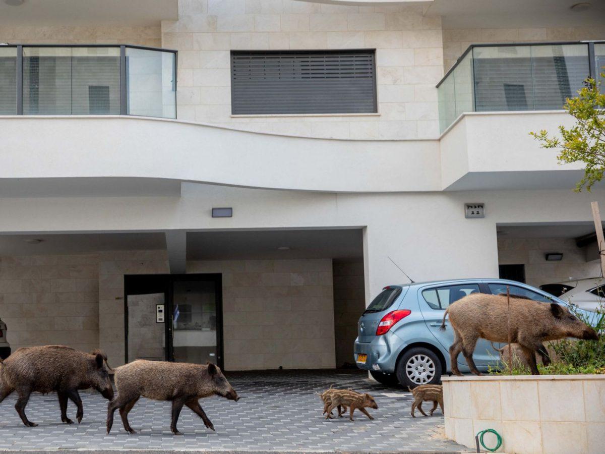 1323844243 scaled - Animais passeam livres pelas cidades enquanto humanos estão em isolamento