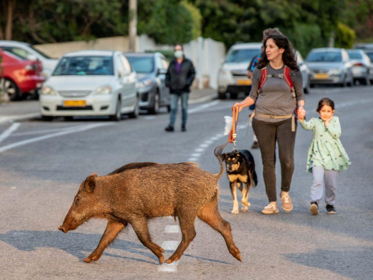 4169800686 scaled - Animais passeam livres pelas cidades enquanto humanos estão em isolamento