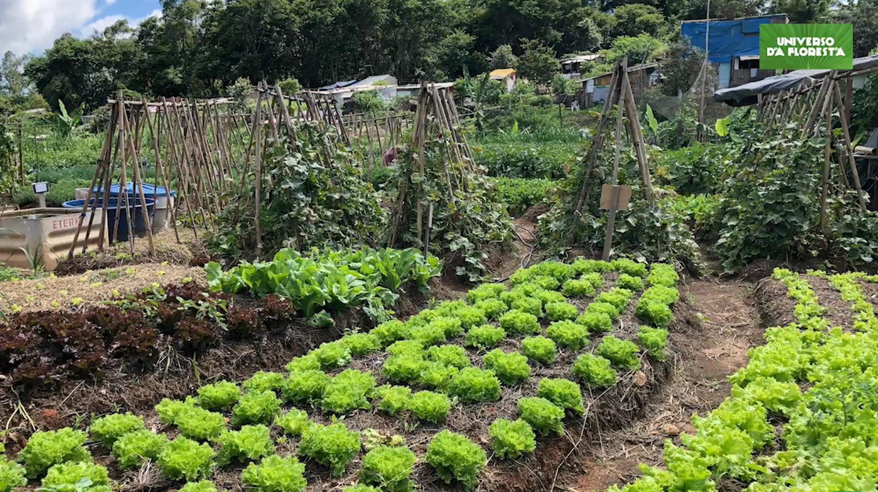 2020 07 07 7 - Campo de futebol vira horta orgânica para alimentar mais de mil famílias