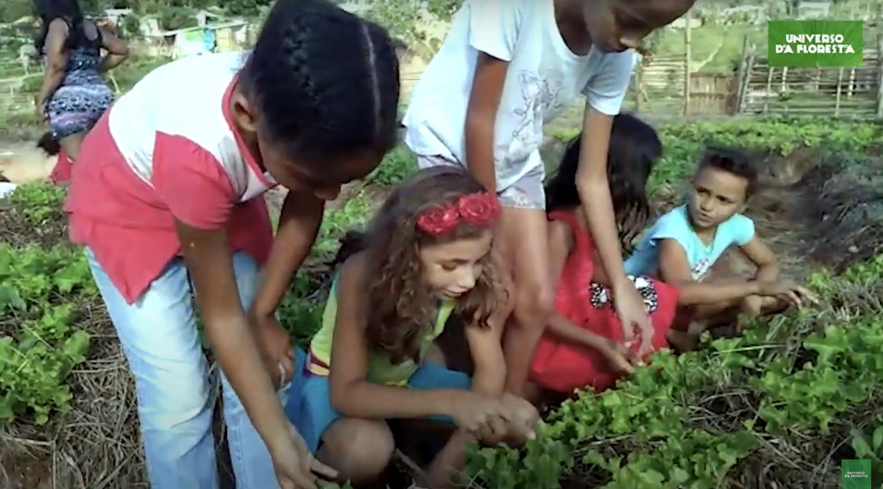 2020 07 07 8 - Campo de futebol vira horta orgânica para alimentar mais de mil famílias