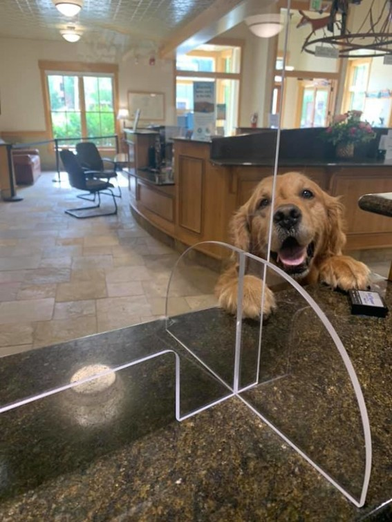 Imagem10 - Neste grupo do Facebook as pessoas compartilham as melhores fotos que tiraram de cães