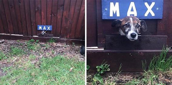 Imagem11 - Neste grupo do Facebook as pessoas compartilham as melhores fotos que tiraram de cães