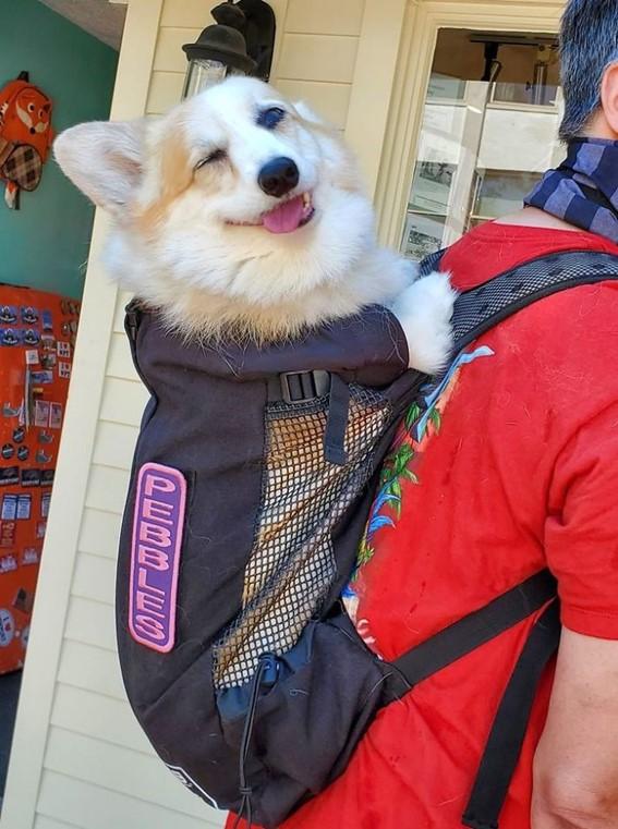 Imagem12 - Neste grupo do Facebook as pessoas compartilham as melhores fotos que tiraram de cães
