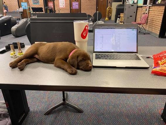 Imagem13 - Neste grupo do Facebook as pessoas compartilham as melhores fotos que tiraram de cães