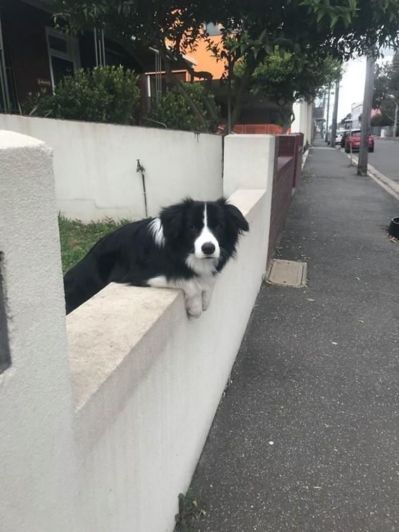 Imagem14 - Neste grupo do Facebook as pessoas compartilham as melhores fotos que tiraram de cães