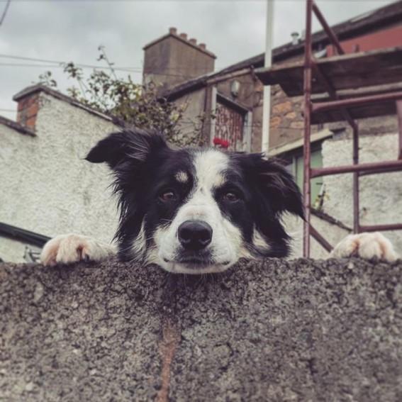 Imagem16 - Neste grupo do Facebook as pessoas compartilham as melhores fotos que tiraram de cães