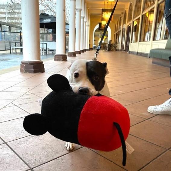 Imagem17 - Neste grupo do Facebook as pessoas compartilham as melhores fotos que tiraram de cães