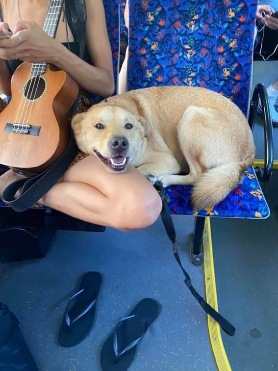 Imagem18 - Neste grupo do Facebook as pessoas compartilham as melhores fotos que tiraram de cães