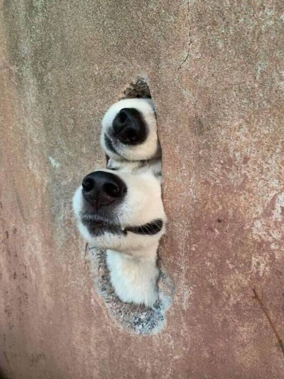 Imagem2 - Neste grupo do Facebook as pessoas compartilham as melhores fotos que tiraram de cães
