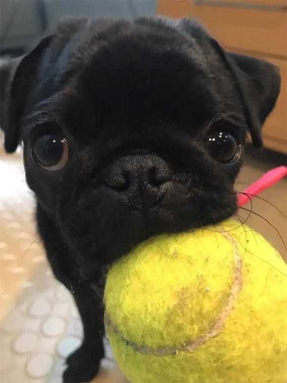Imagem21 - Neste grupo do Facebook as pessoas compartilham as melhores fotos que tiraram de cães
