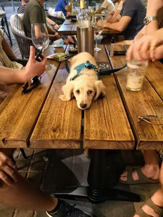 Imagem22 - Neste grupo do Facebook as pessoas compartilham as melhores fotos que tiraram de cães
