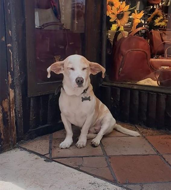 Imagem24 - Neste grupo do Facebook as pessoas compartilham as melhores fotos que tiraram de cães