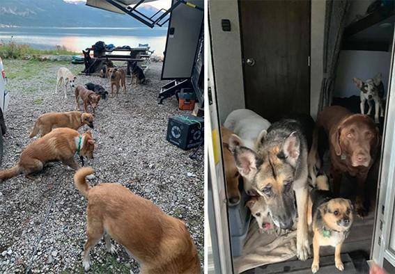 Imagem25 - Neste grupo do Facebook as pessoas compartilham as melhores fotos que tiraram de cães