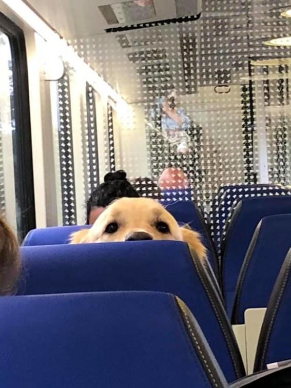 Imagem5 - Neste grupo do Facebook as pessoas compartilham as melhores fotos que tiraram de cães