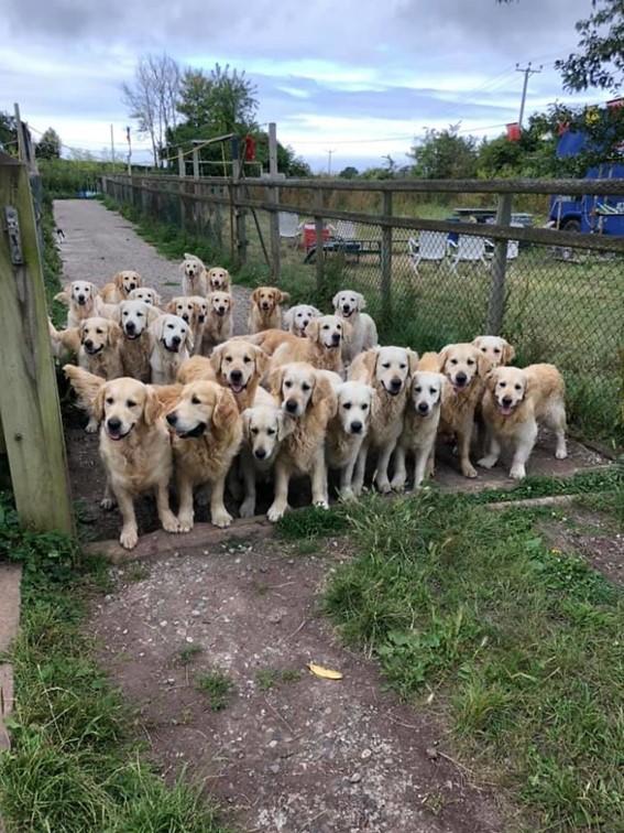 Imagem8 - Neste grupo do Facebook as pessoas compartilham as melhores fotos que tiraram de cães