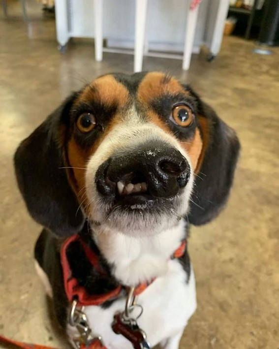 Imagem9 - Neste grupo do Facebook as pessoas compartilham as melhores fotos que tiraram de cães