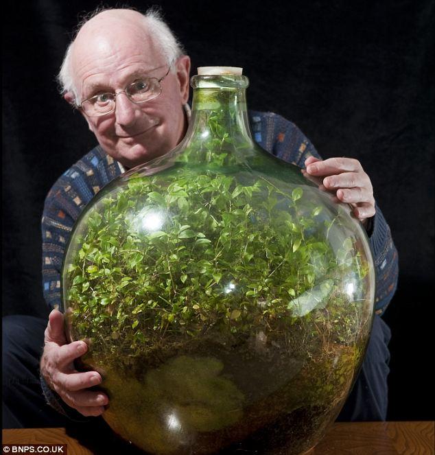 article 2267504 17212EB3000005DC 781 634x663 - Homem cultiva jardim em garrafa, que está vivo e verde sem receber água desde 1972