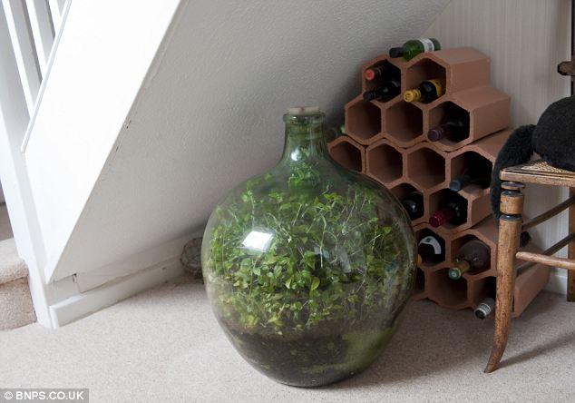 article 2267504 17214589000005DC 901 634x444 - Homem cultiva jardim em garrafa, que está vivo e verde sem receber água desde 1972