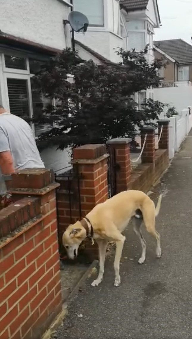 2021 01 20 9 - Dono de cãozinho machucado gasta R$ 2.200 para descobrir que o pet estava imitando-o por solidariedade